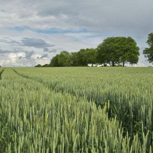 El bioetanol acelera su propuesta como firme sustituto de los carburantes fósiles