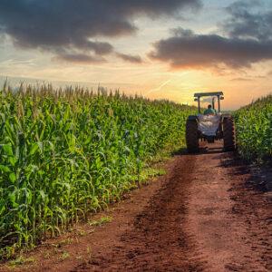 La producción de etanol a base de maíz aumenta un 58% en Brasil